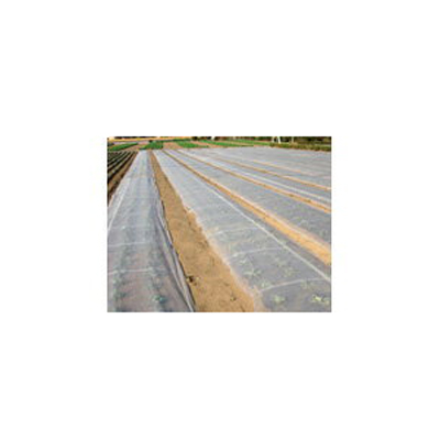 2020年8月19日より順次発送予定 ダイオ化成 ベタがけ・トンネル資材 透明 ベタロン(タフベル後継) 200cm×100m DT-550 開口率45% 2本入【代引不可】 PVA 霜害 保温 換気 不織布 露地