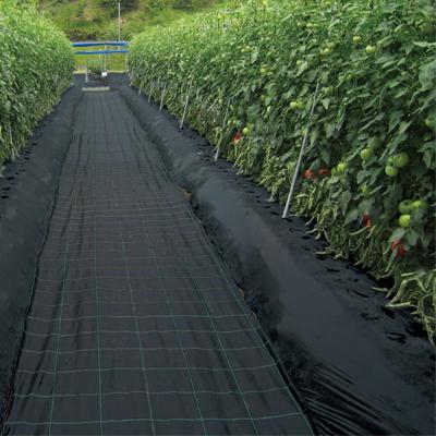 日本ワイドクロス 防草シート 強力アグリシート BB2218 1.5×100m ブラック 農業資材 メガソーラー 太陽光発電