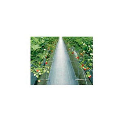 ダイオ化成 防草シート シルバー グランドシートS-BN(抗菌剤無し)2m×100m【代引不可】