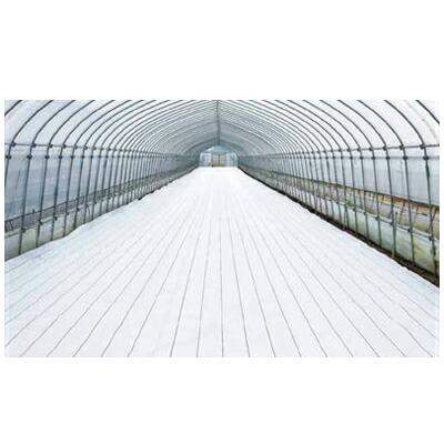 2020年8月19日より順次発送予定 ダイオ化成 防草シート グランドシートα ホワイト 50cm×100m (抗菌剤なし) 8本入
