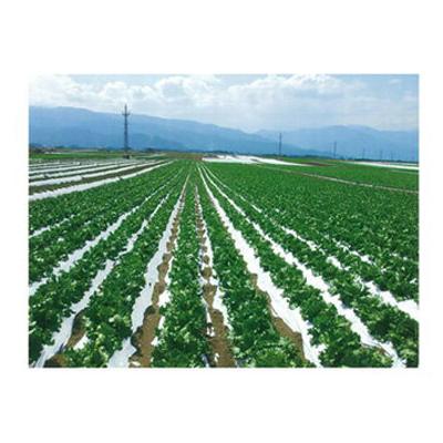 オークラ(大倉) 農ポリ 白黒マルチ こかげマルチ デラックス 0.025mm×150cm×200m 2本入
