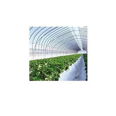 日新化学工業 農PO テクノセン光 0.075mm×230cm×100m巻【代引不可】