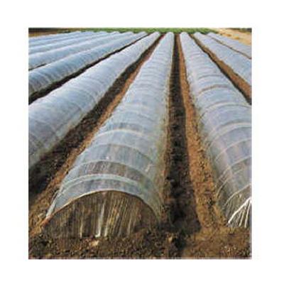 2020年8月19日より順次発送予定 オークラ(大倉) 透明 一般用農ポリ 0.05mm×210cm×100m 2本入