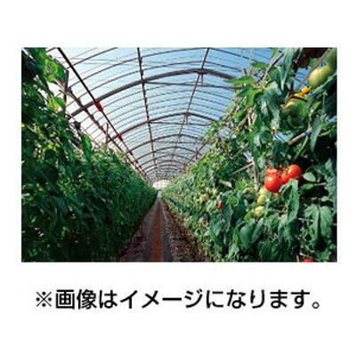 アキレス 農ビ 晴天(ノンキリーあすか) 巾135cm 厚さ0.05mm 100m巻