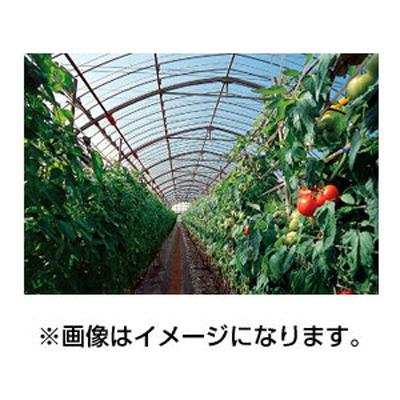 アキレス 農ビ 晴天(ノンキリーあすか) 巾185cm 厚さ0.05mm 100m巻