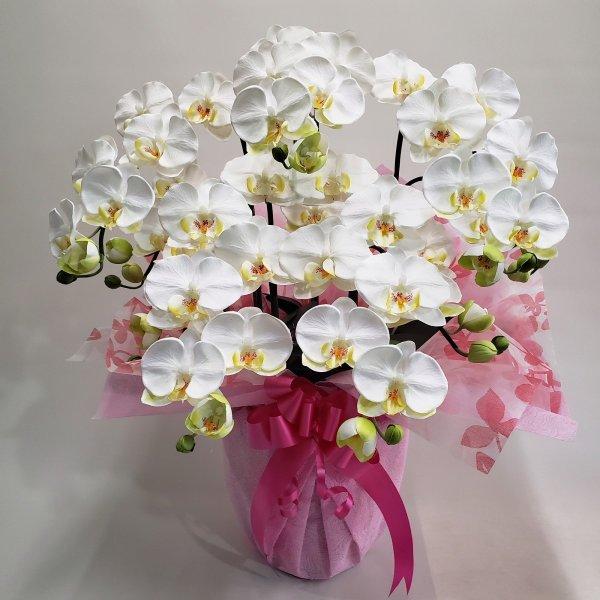 胡蝶蘭-白黄 5F高さ70cm×巾40cm造花 オープニング 大放出セール 2020A W新作送料無料 光触媒