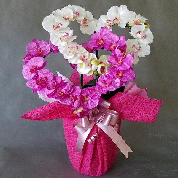 胡蝶蘭-白ピンクハート型高さ70cm×巾40cm造花 光触媒 評判 Seasonal Wrap入荷