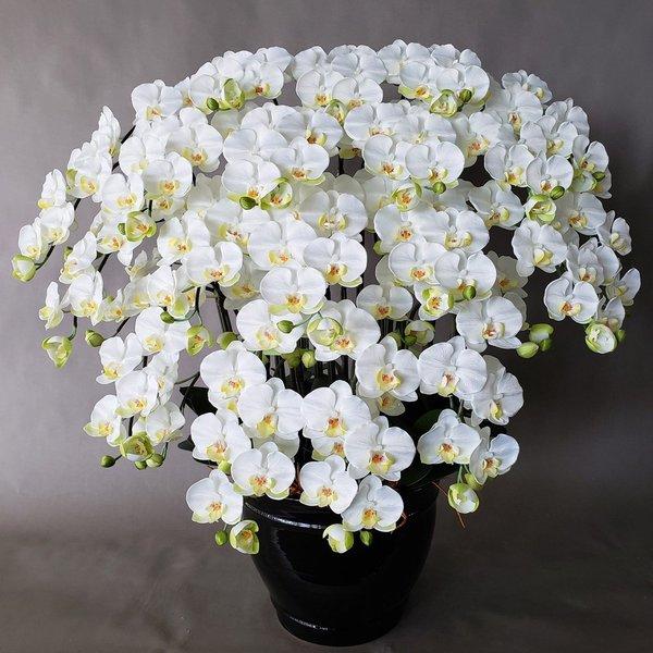胡蝶蘭M-白黄 20F  高さ100cm×巾90cm 造花·光触媒