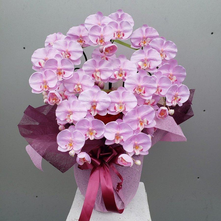胡蝶蘭M5FRパープル 造花 約高70×幅40 メーカー公式 大決算セール