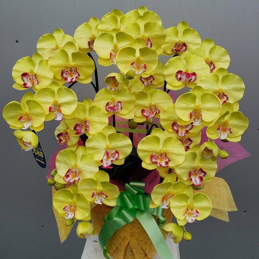 胡蝶蘭M 5F Rイエロー 約高70×幅40b 光触媒 新品 送料無料 造花 AL完売しました。