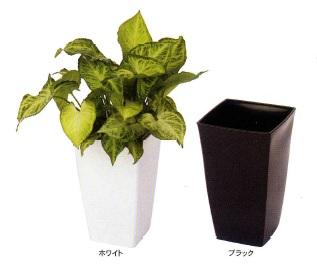 インテリアとしてのプラ鉢設計にこだわってみました 贈り物 花 ガーデニング 植木鉢 プランター ホワイト 送料無料 鉢 アイカ トールスクエア 8号