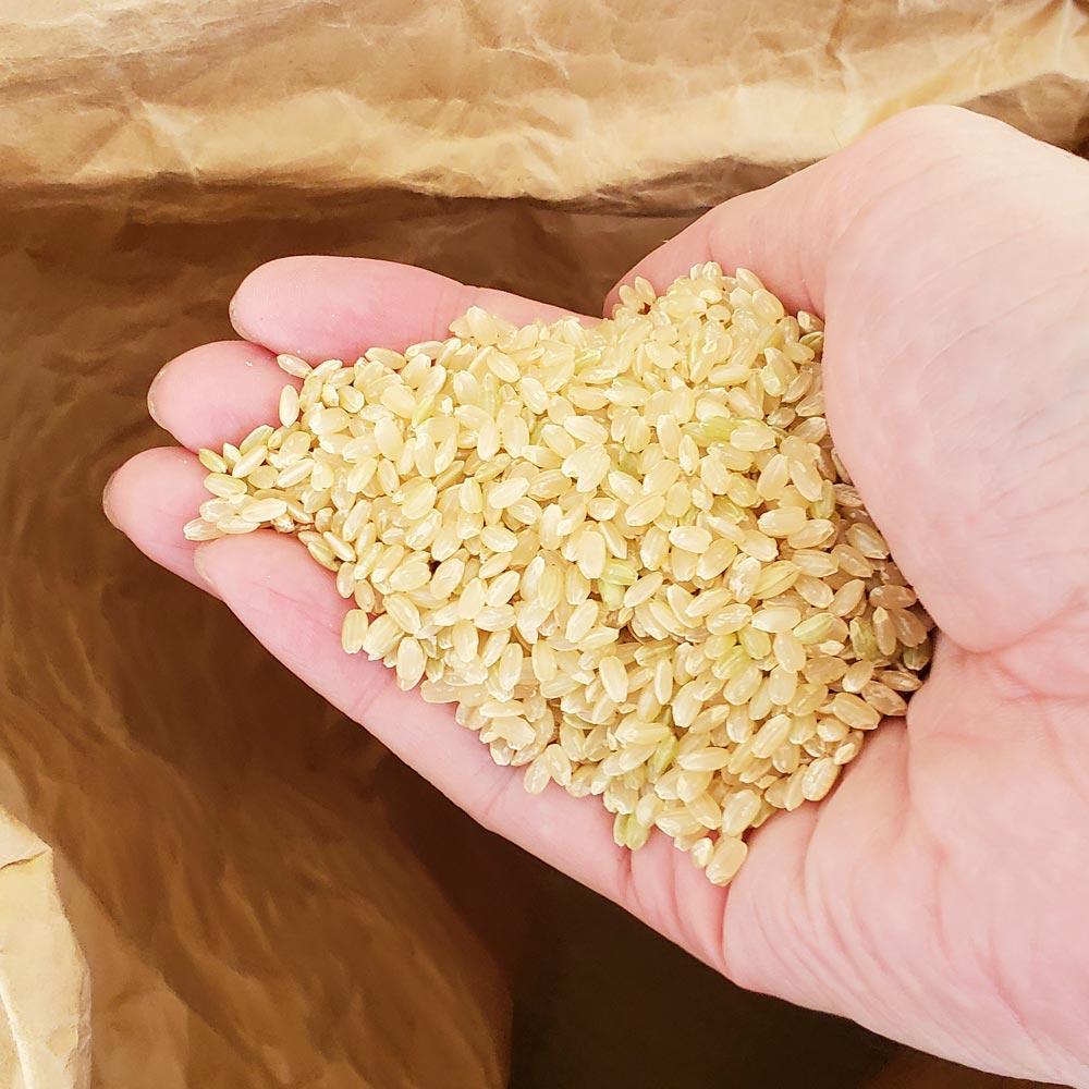 農家 30 直送 米 キロ お