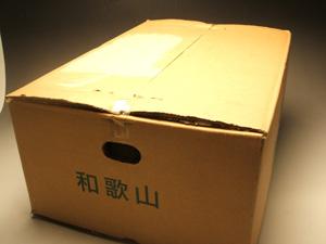 紀州南高梅 加工用 生梅 3L 5キロ箱 和歌山紀州より直送
