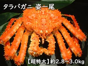 《送料無料》ボイルタラバガニ姿2.8~3.0kg/たらば蟹/タラバガニ/たらばがに/姿身/贈り物/北海道/根室/産地直送/現役漁師/熨斗可/メッセージ可/お歳暮/送料込み 期間限定 ポイント5倍