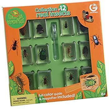 中古 輸入品 新品未使用 有名な 未使用 Encased Insects