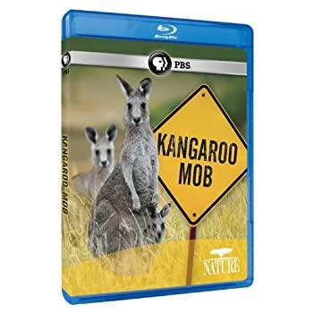 高級 中古 輸入品 ストア 未使用 Nature: Blu-ray Kangaroo Mob Import