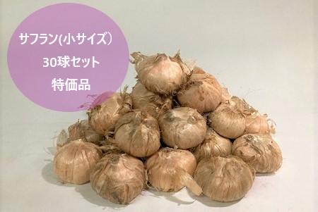 土に植えなくても開花します SALENEW大人気 サフラン 球根 スパイスに利用可能 贈り物 30球 小サイズ セット