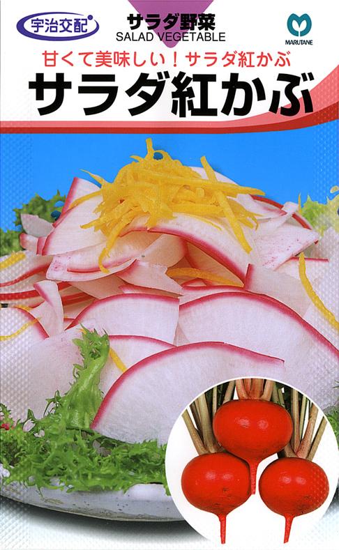 甘くて美味しい サラダ紅かぶ 市場 野菜種子 蕪 本日限定 家庭菜園 秋播き種子 種子1.8ml入り カブ