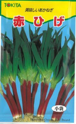 赤ひげ葱 ネギ ねぎ 野菜種子 種子 爆安 種 返品交換不可 タネ 家庭菜園 独特の柔らかさと風味が美味 10ml入り 葉菜類野菜種子 赤ひげねぎ たね