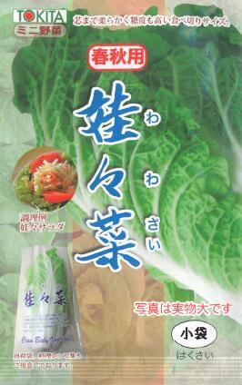白菜 はくさい ハクサイ 送料無料 新品 種子 たね タネ 種 ワワサイ 娃々菜 1g入り わわさい 秋播き種子 家庭菜園 全商品オープニング価格
