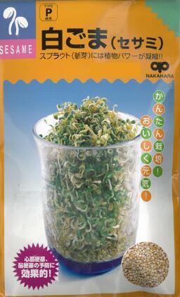 スプラウト モデル着用 注目アイテム 種子 キャンペーンもお見逃しなく 野菜種子 キッチン菜園 40ml スプラウト用種子 セサミ 白ごま