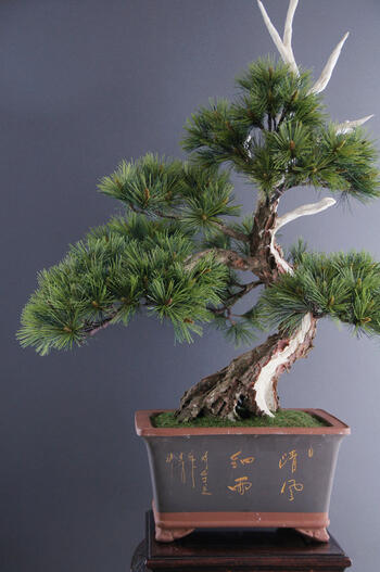 盆栽 模様木(神舎利付) #3(造花)