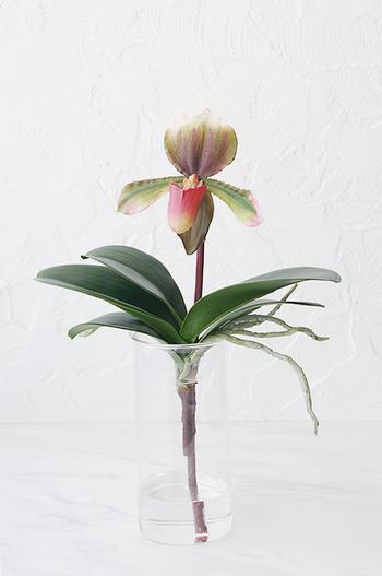 レッドパフィオペディラム ガラスポット(造花)
