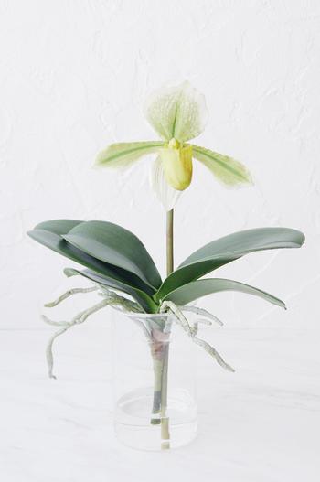 グリーンパフィオペディラム ガラスポット(造花)