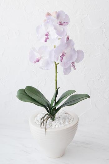 ライトピンク ソフィア胡蝶蘭 ホワイトポット(造花)