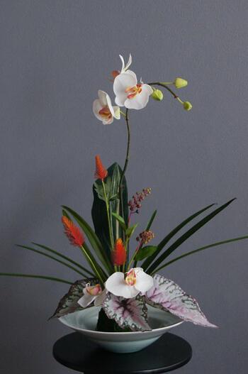 マランタ胡蝶蘭 × 陶芸作家 樋口邦春作 青白磁潮流文鉢(造花)