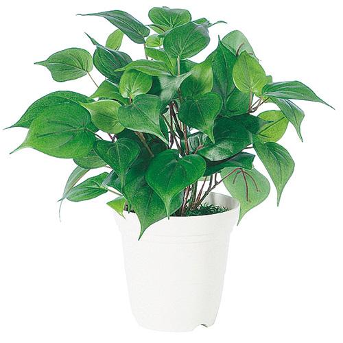 Akanbi Rakuten Global Market Oxycordzhum H35 Size Standard Pots