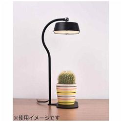 オリンピア LEDスタンド MST01-BK ブラック 電球色 MST01BK