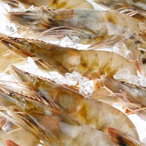 生食OK 無添加 冷凍 ハワイ産有頭海老カウアイの宝石 約20~30尾入り 卓出 送料無料 カウアイシュリンプ 1kg