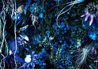 【送料無料】SUGIZO / ONENESS M[CD][2枚組][初回出荷限定盤]【J2017/11/29発売】