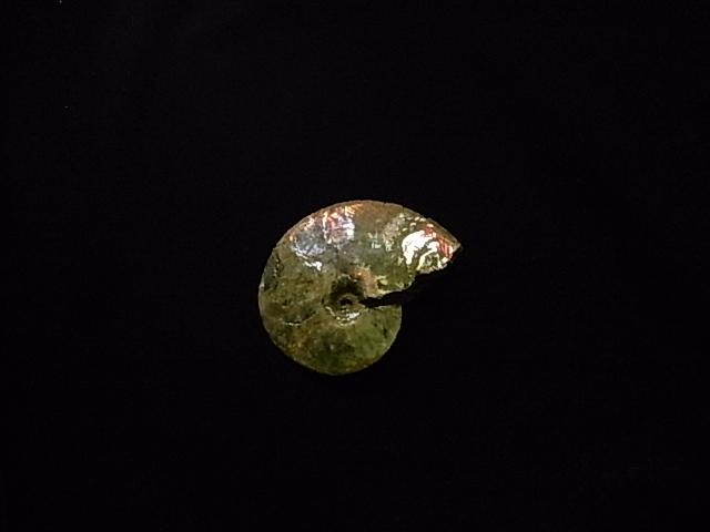 待望 約7000万年前の神秘が宿る化石宝石の原石 極稀少カナダ産アンモナイト実物レア化石 ◆セール特価品◆ アンモライト原石標本