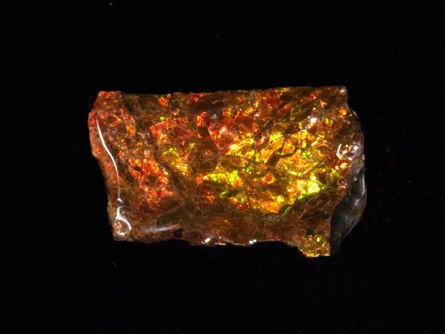卓越 約7000万年前の神秘が宿る化石宝石の原石片 稀少カナダ産アンモナイト実物レア化石 アンモライト破片 超人気 専門店 欠片 かけら