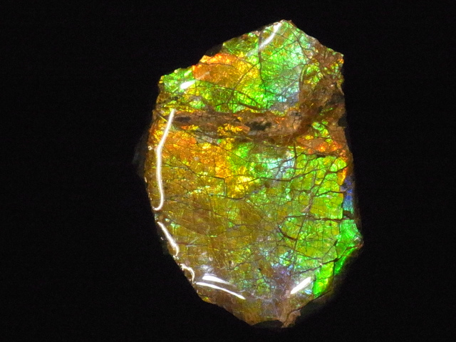 限定モデル 約7000万年前の神秘が宿る化石宝石の原石片 新色 稀少カナダ産アンモナイト実物レア化石 アンモライト破片 かけら 欠片