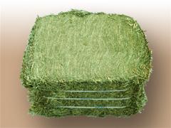 期間限定特価品 大自然が育んだ天然 在庫一掃 良質の牧草 チモシー1番刈り20kgダブルプレス