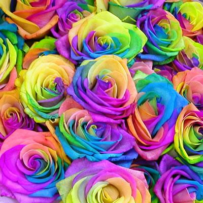 rainbow roses rainbow rose miracle 10 off