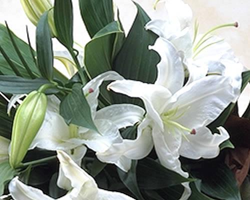タイムセール でお買い得 タイムセール豪華なカサブランカの花束 ユリの王様 白 百合 2020新作 流行 バレンタインデー お供え カサブランカが3本入り ギフト 誕生日