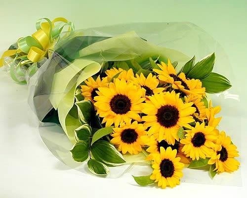 夏といえばひまわりの花束 季節のお花 花束 お誕生日 大輪ひまわり20本の花束 売れ筋 あす楽 海外