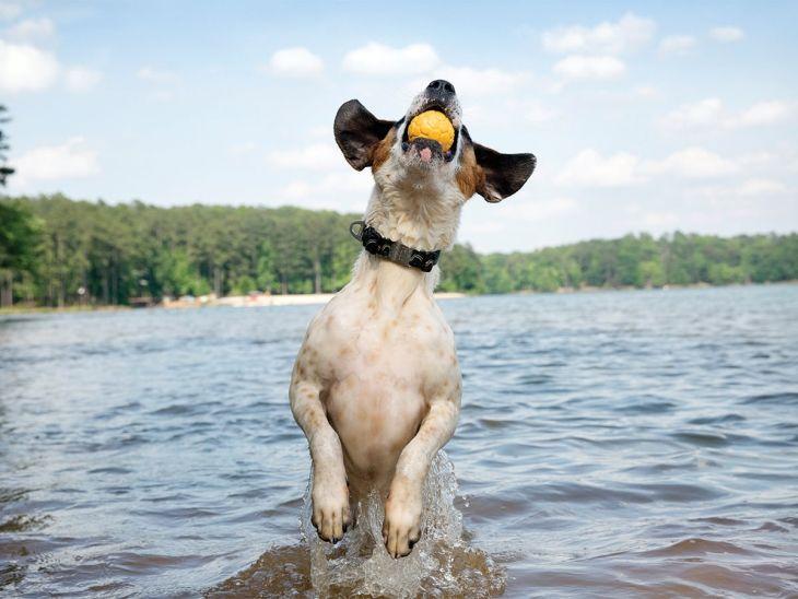 ドッグトイ ボズ ボール 直径10cm 3カラー Largeサイズ 犬 おもちゃ 首輪 ロープ 噛む おもちゃ ボール 超小型犬 中型犬 小型犬 大型犬 壊れない 無添加  ぬいぐるみ 動く リアル ボーン パピーおもちゃ 丈夫なおもちゃ 壊れない