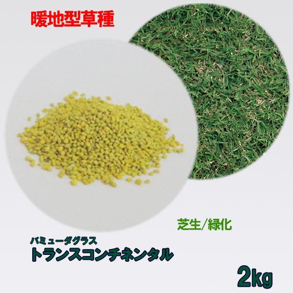 コート種子 バミューダグラス トランスコンチネンタル 2kg 送料無料
