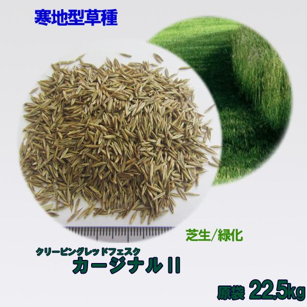 種子 クリーピングレッドフェスク カージナルII  22.5kg 送料無料