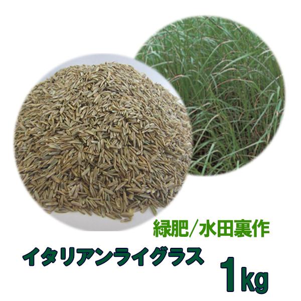 種子 イタリアンライグラス 1kg