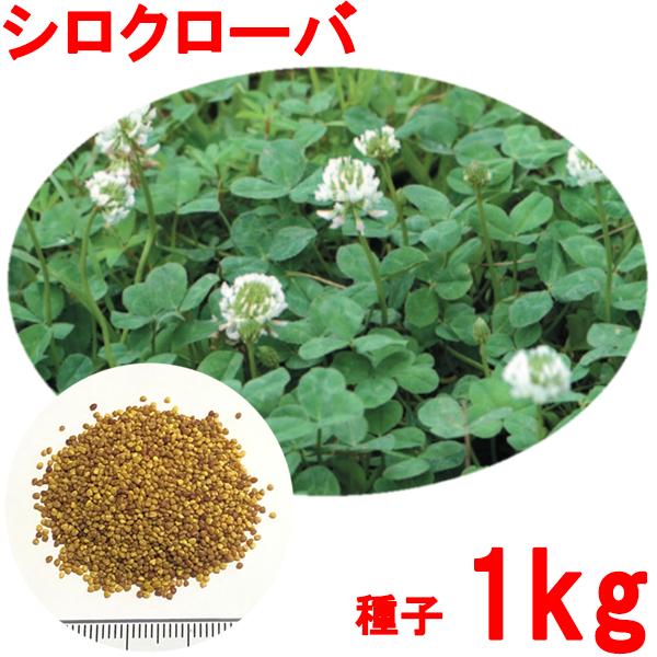 国内送料無料 種子 シロクローバ 美品 1kg
