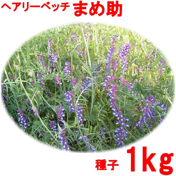 種子 ヘアリーベッチ まめ助 1kg
