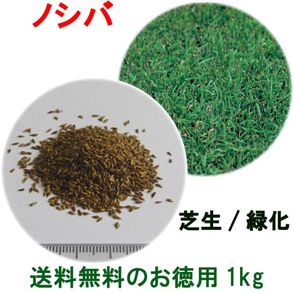 種子 ノシバ 1kg 送料無料