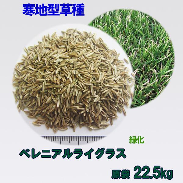種子 ペレニアルライグラス 22.5kg 送料無料