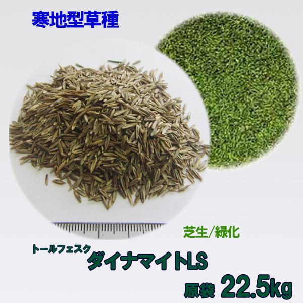 種子 トールフェスク ダイナマイトLS 22.5kg